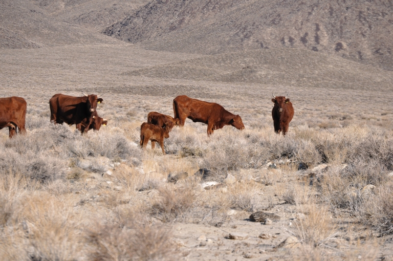 Second year cows already at low-end of valley.