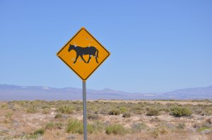Wild Horses, just after this sign, I saw this poor looking wild horse