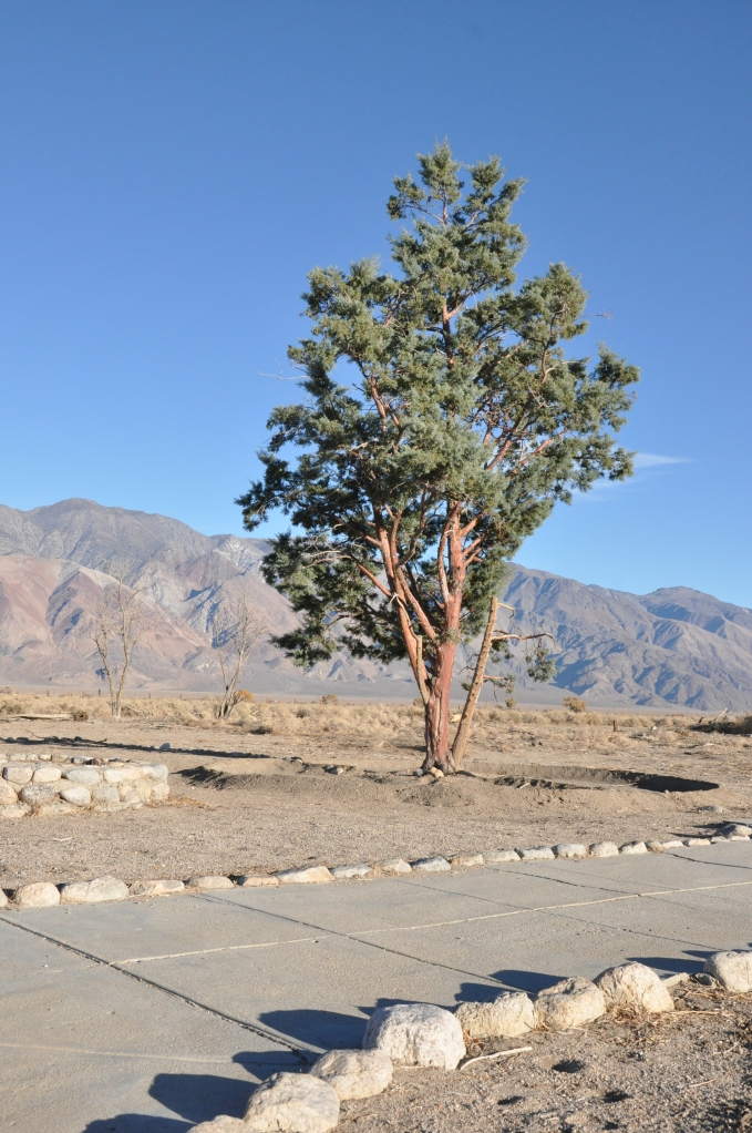 Red Cedar at entrance