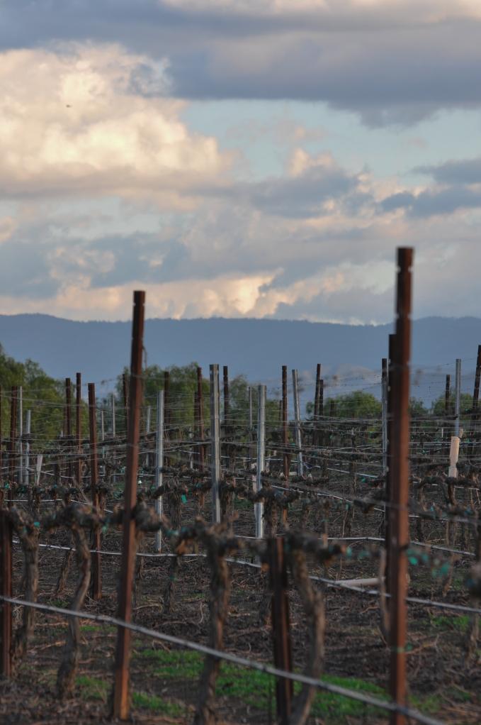 Mt Palomar overlooking vineyards