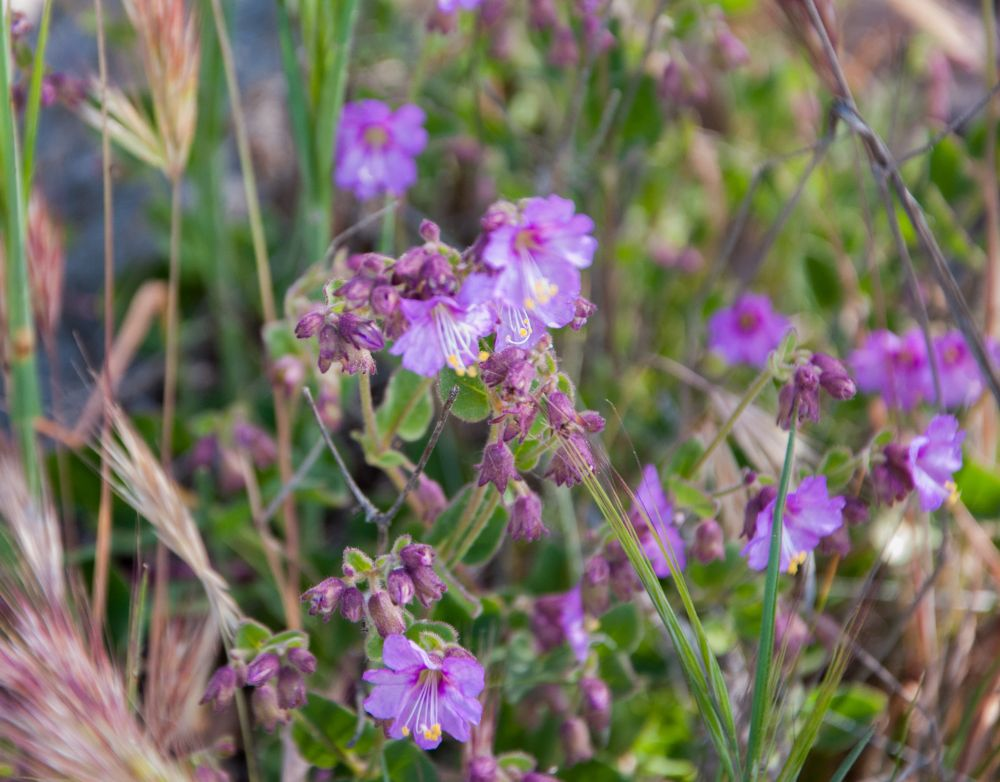 Abundant Wildflowers (3/6)