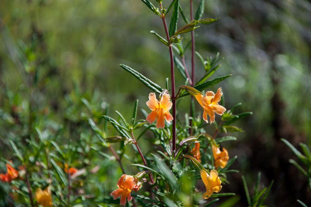 Abundant Wildflowers (4/6)