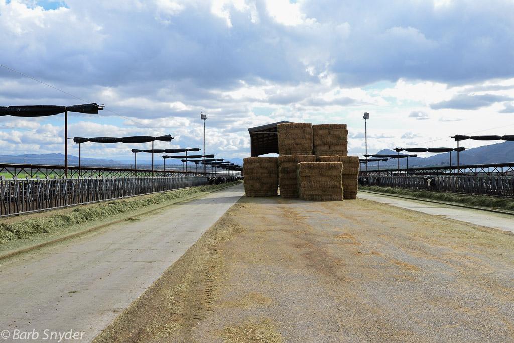 hayway (1 of 1)-2