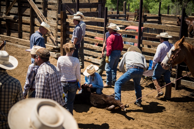 This cowgirl wrestled the calf down without the help of any of the guys.