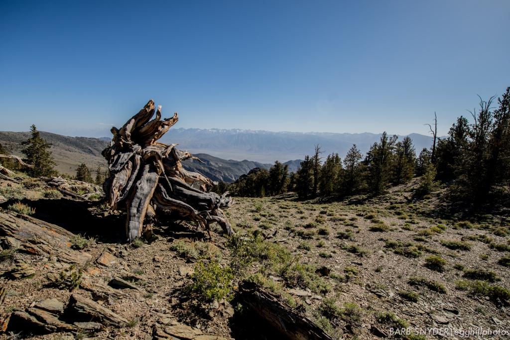 Looking toward the Sierras.