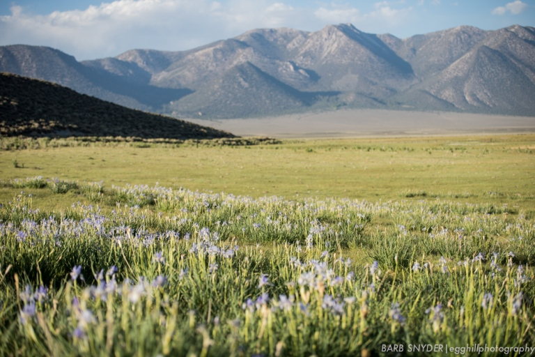 Wild Iris were abundant.