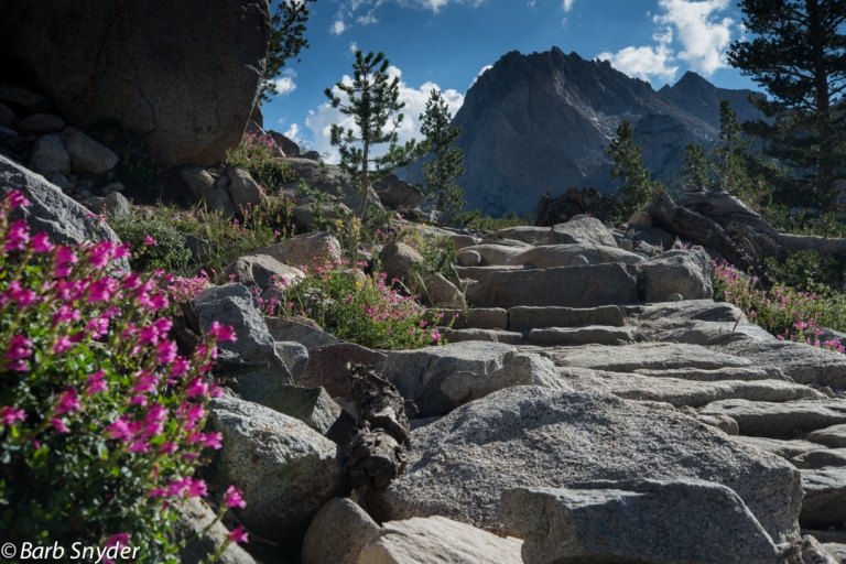 Davidson's Penstemon all along the rocky path.