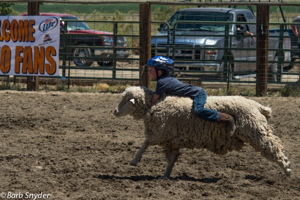 Mutton Busting Champion
