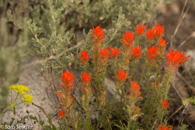 Indian Paintbrush on the way back down.
