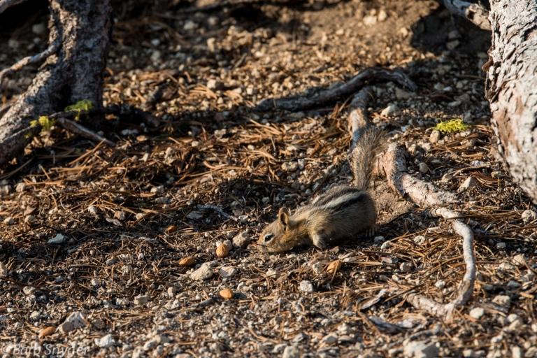 Chipmunks enjoying the almonds I gave them.