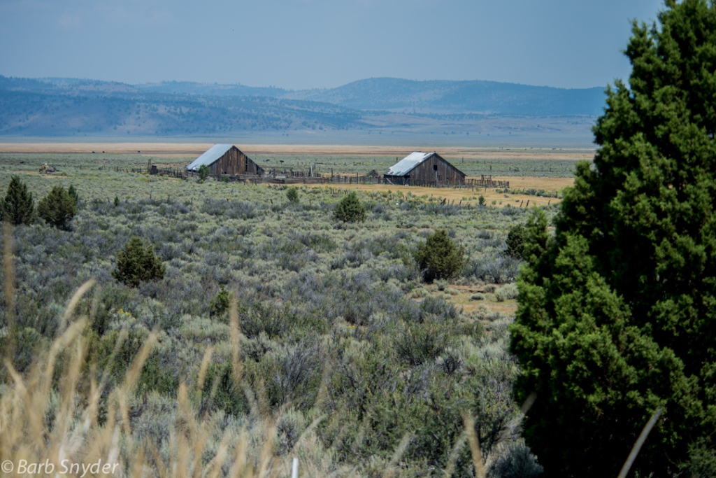 Oregon cattle country.