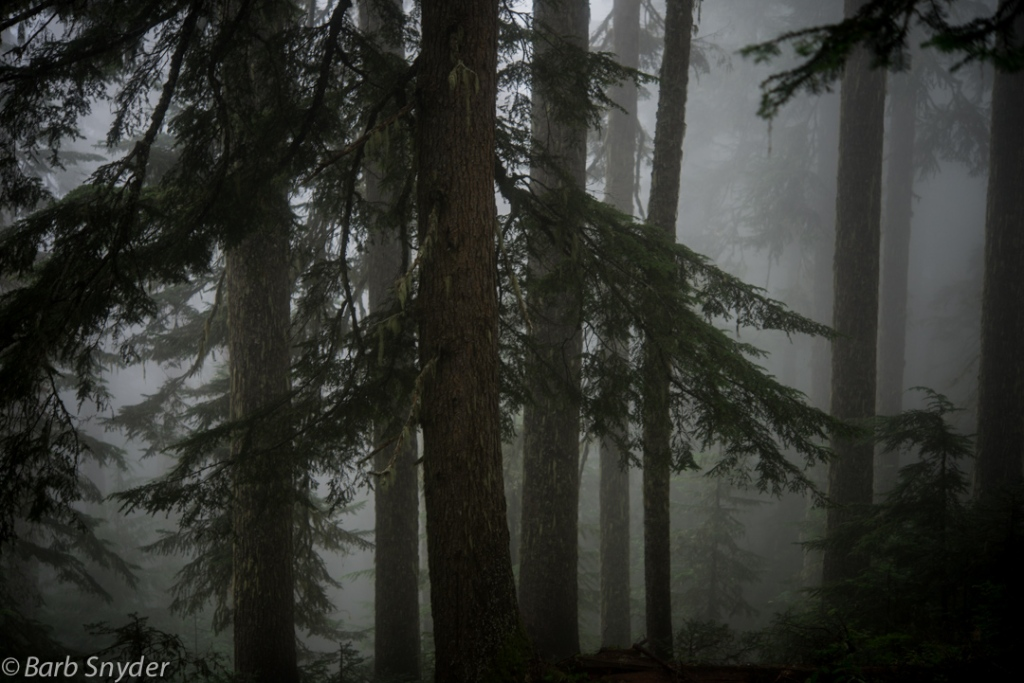 Fog and Trees, one of my favorite things.