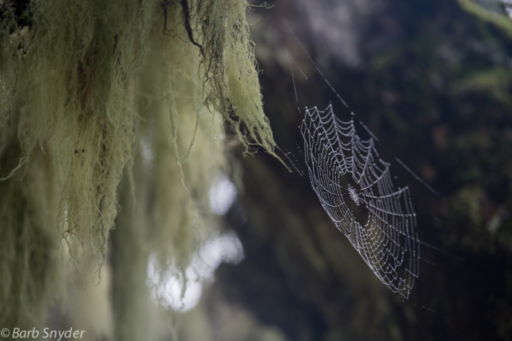 Damp moss and wet jeweled cobwebs.