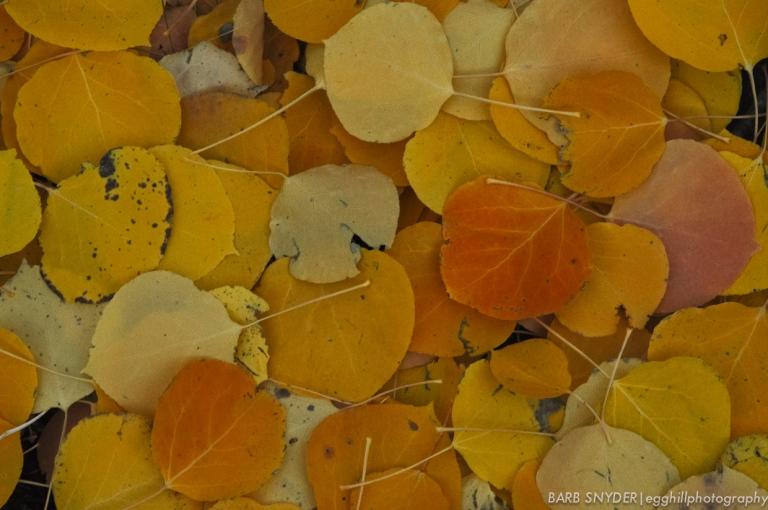 Aspen leaf bed
