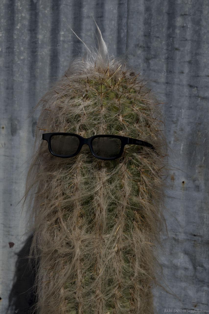 Cactus Man.