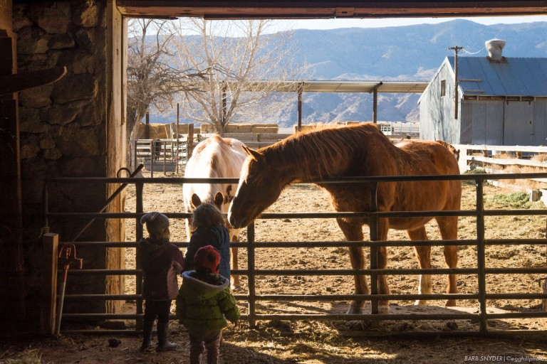 The horses at Deep Springs know when the kids visit, they usually have treats!