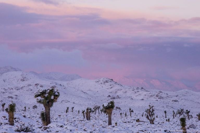 Pink skies heralded the dawn.