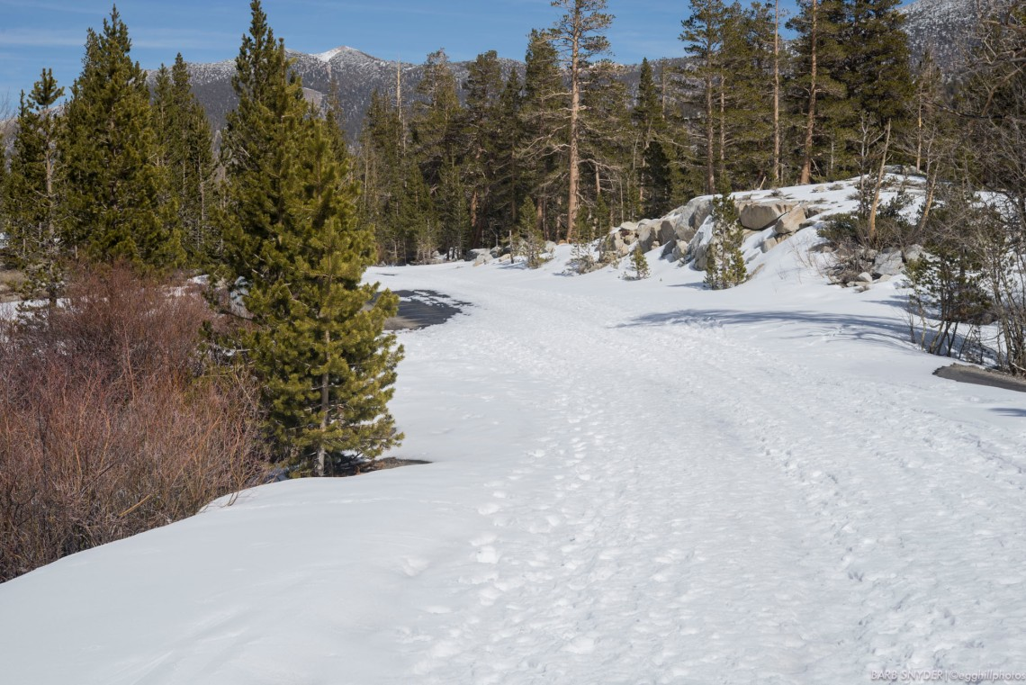 Yesterday was my first high-country hike as I've stayed away from slippery slopes. The road shows the many footsteps of the hikers since it's closed to traffic. I stayed on the roads - the slopes are still slippery and I don't have snowshoes.