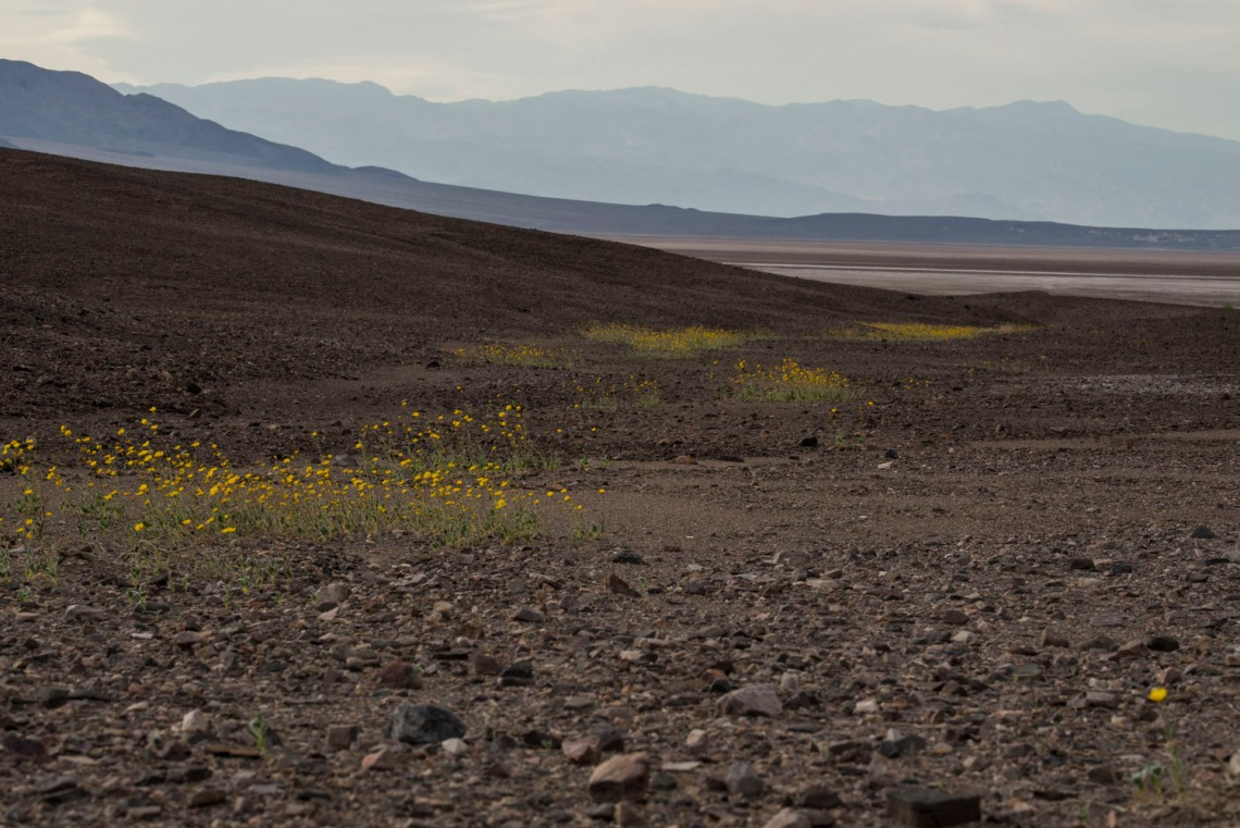 Flower trails