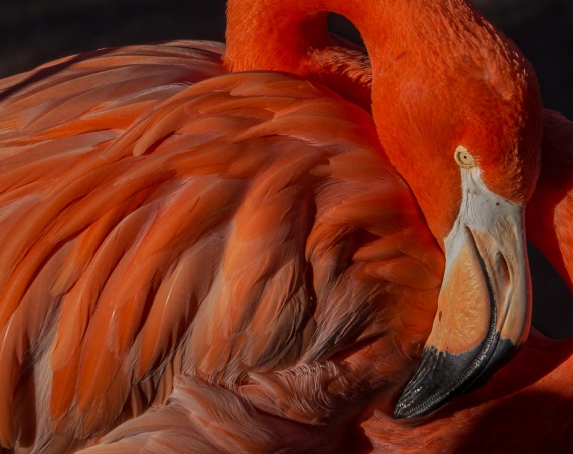 flamingo (1 of 1)