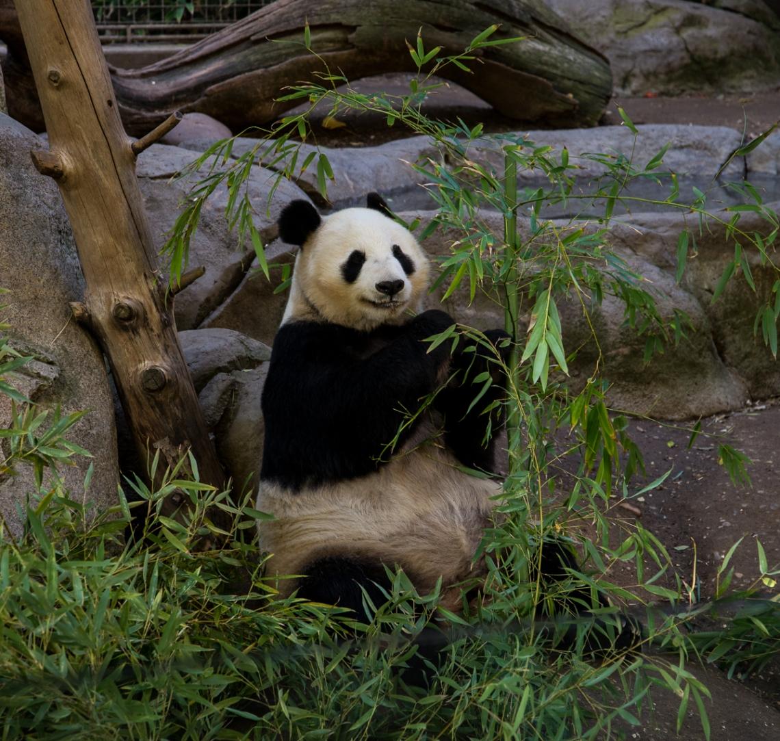 panda (1 of 1)