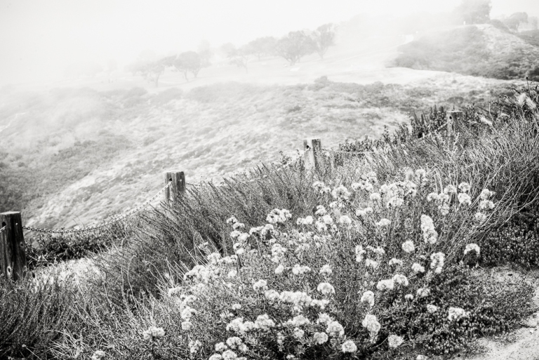 Mist (1 of 1)